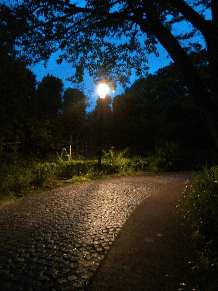 Camino al campo de luciernagas (蛍の里)